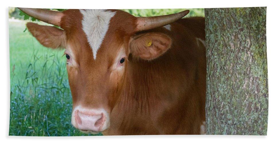 Cow Bath Sheet featuring the photograph Peek A Boo by Garvin Hunter