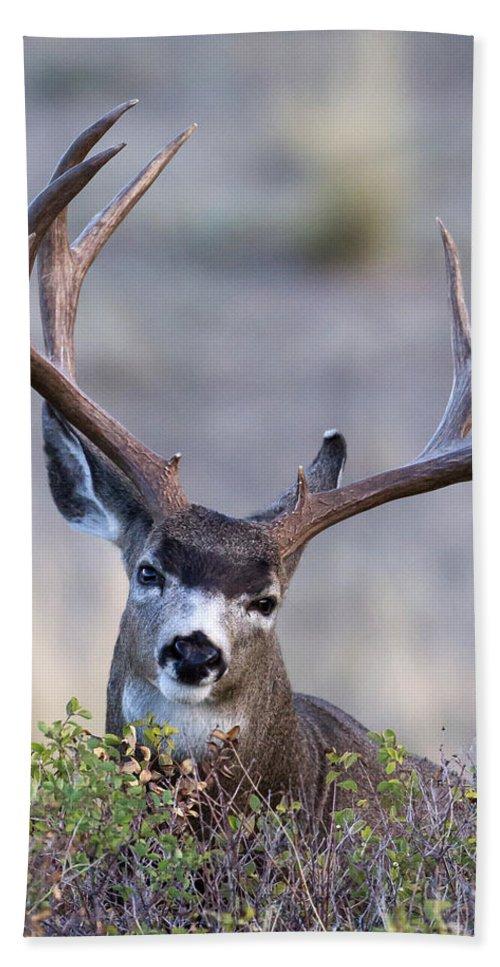 Mule Deer Bath Sheet featuring the photograph Peek A Boo by Jack Bell