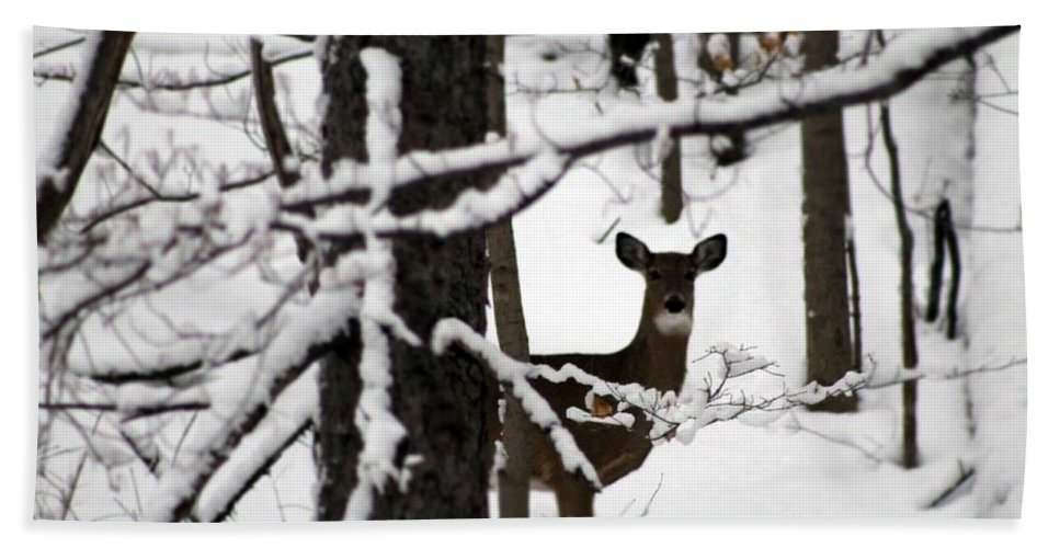 Deer Hand Towel featuring the photograph Peek A Boo by Wendy Gertz