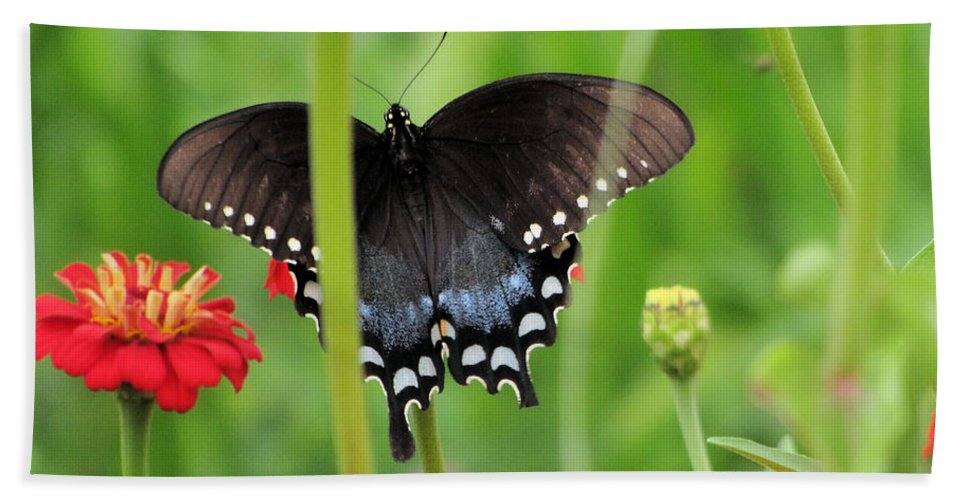 Butterfly Bath Sheet featuring the photograph Peekaboo by C H Apperson