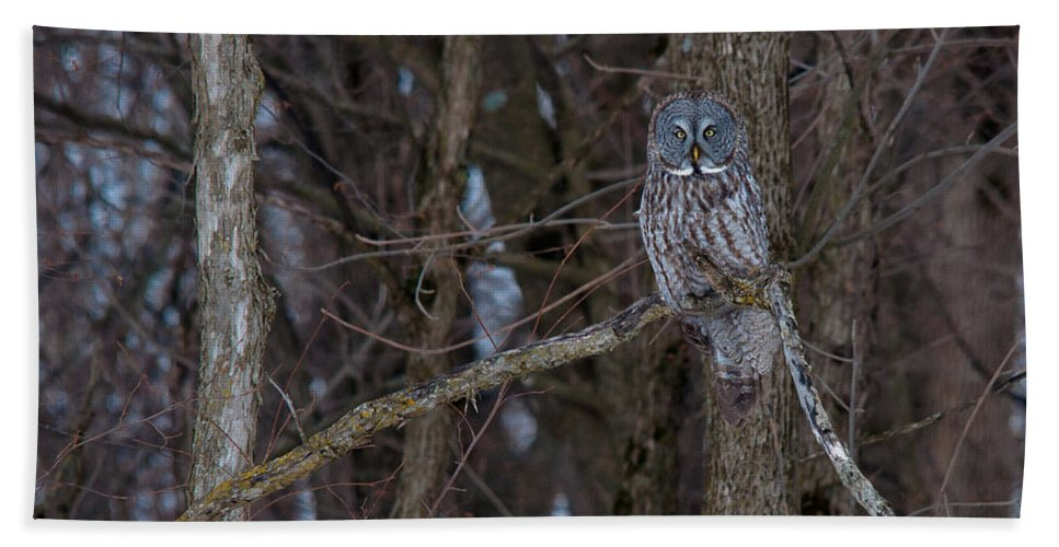 Owls Hand Towel featuring the photograph Peering by Cheryl Baxter