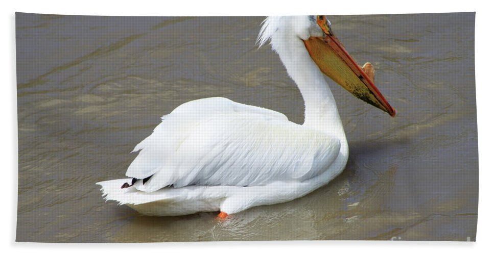 Bird Hand Towel featuring the photograph Pelecanus Eerythrorhynchos by Alyce Taylor