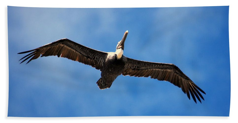 Pelican Hand Towel featuring the photograph Pelican 002 by Larry Ward