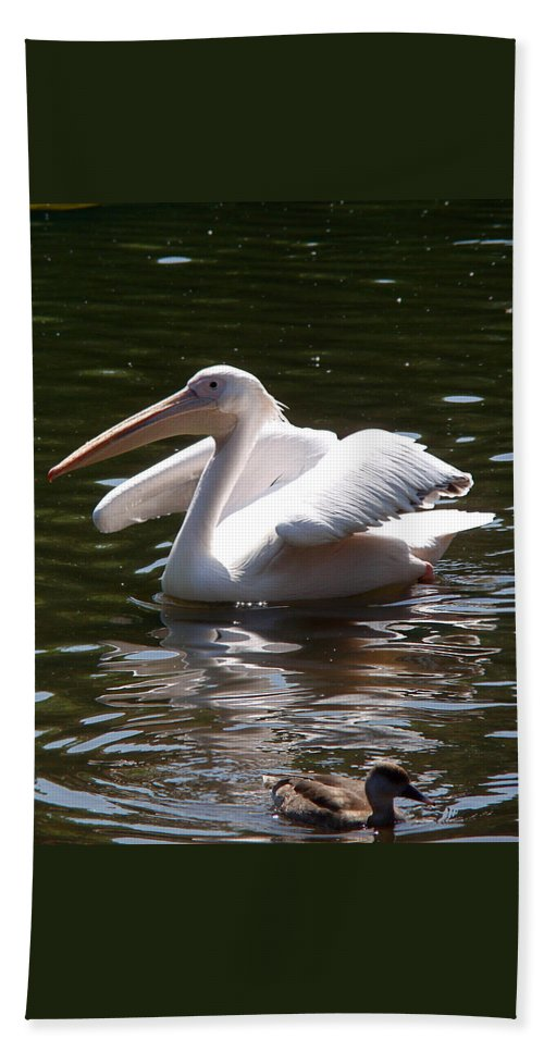 Great White Pelican Bath Towel featuring the photograph Pelican And Friend by Rona Black
