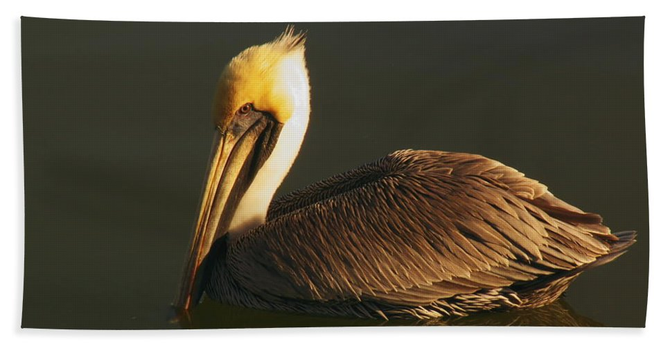 Pelican At Dark Hand Towel featuring the photograph Pelican At Dark by Robert Brown