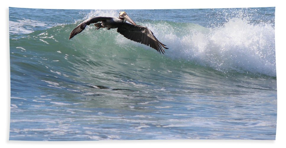 Ocean Bath Sheet featuring the photograph Pelican At Playa Grande by Lorraine Baum