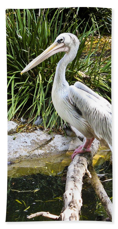Pelican Bath Sheet featuring the photograph Pelican At Rest by Jon Berghoff