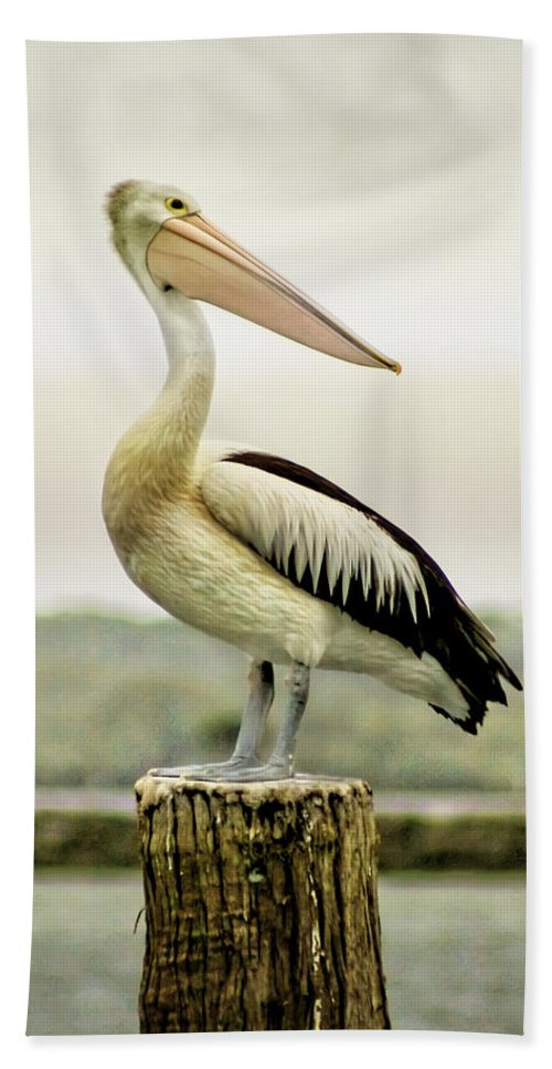 Animlas Bath Sheet featuring the photograph Pelican Poise by Holly Kempe