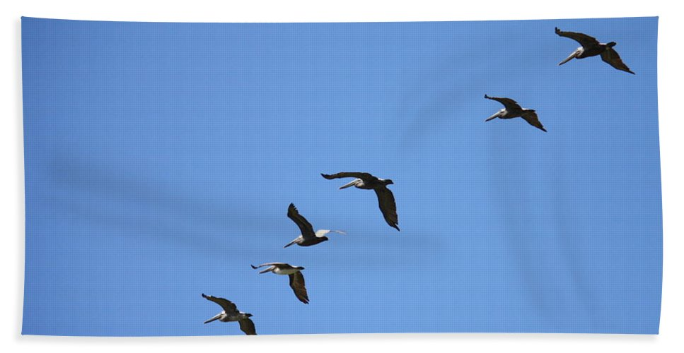 Pelicans Hand Towel featuring the photograph Pelicans All In A Row by Carol Groenen