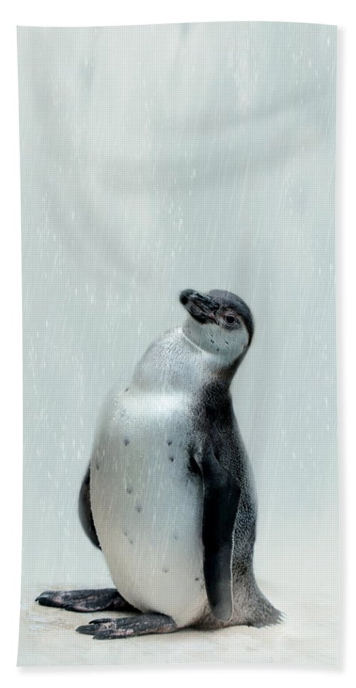 Penguin Bath Sheet featuring the photograph Penguin by Heike Hultsch