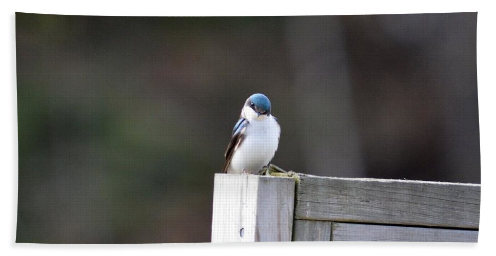 Tree Swallow Hand Towel featuring the photograph Pensive Tree Swallow by Thomas Phillips