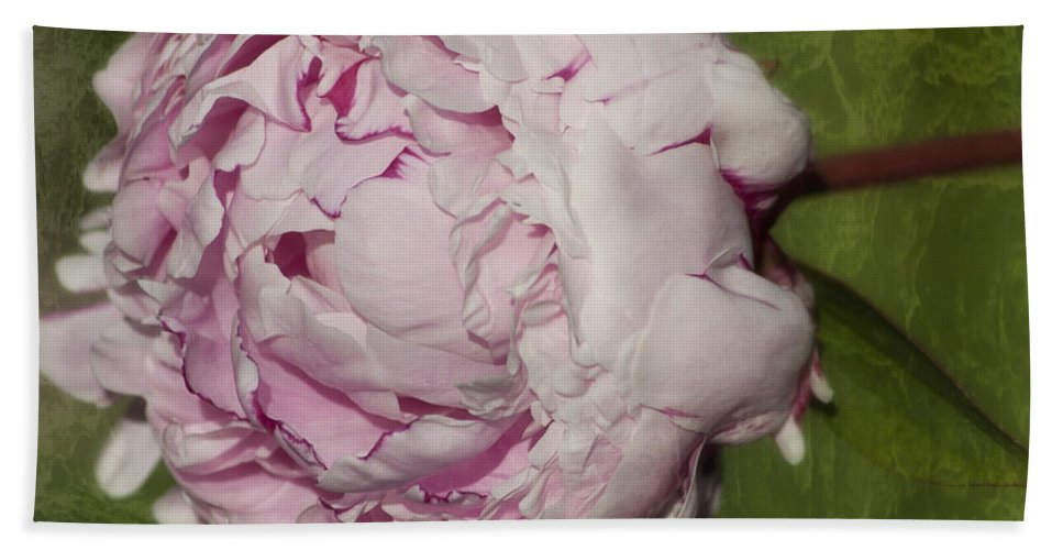 Peony Hand Towel featuring the photograph Peony 2 by Belinda Greb