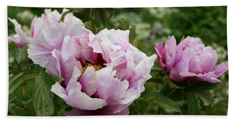 Peony Hand Towel featuring the photograph Peony Bush by Christiane Schulze Art And Photography