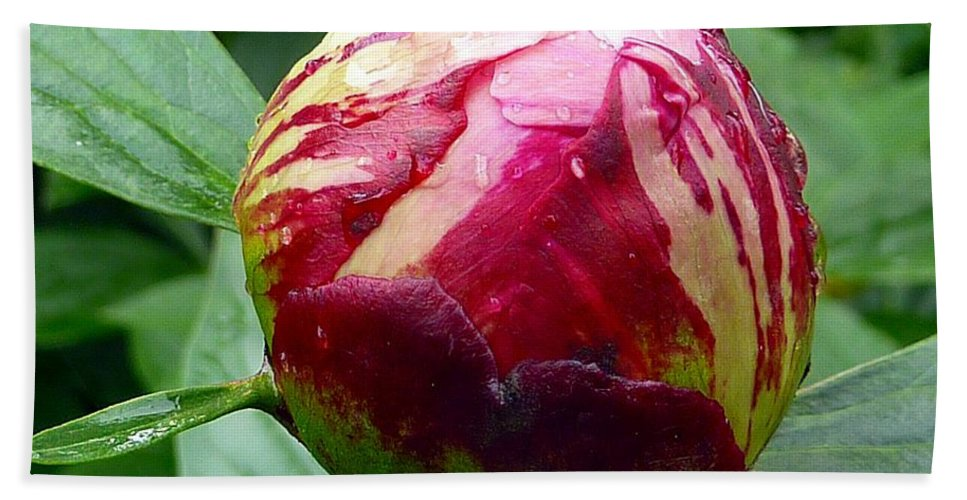 Flower Hand Towel featuring the photograph Peony Flower by FL collection
