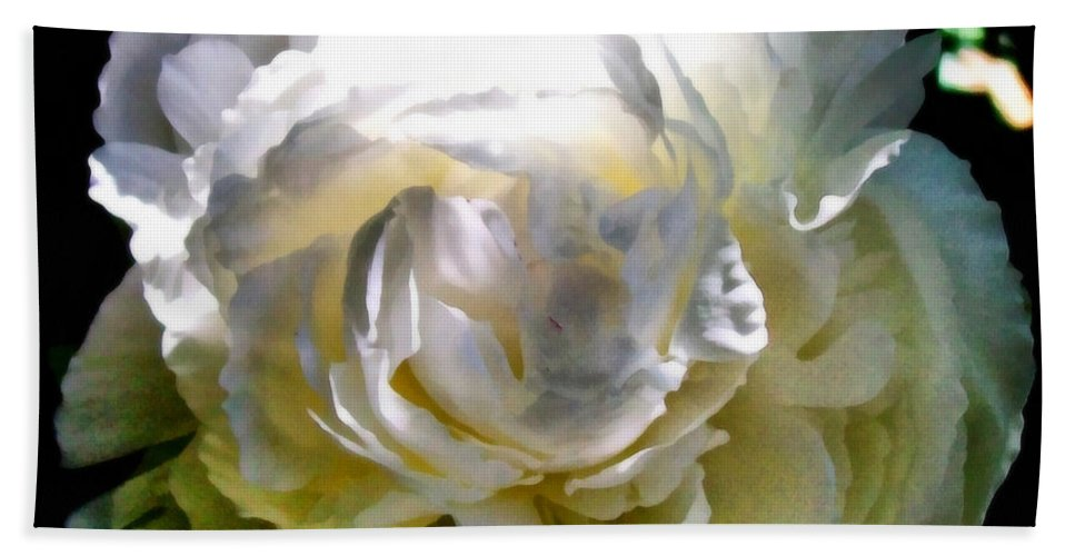 White Peony Bath Sheet featuring the photograph Peony In Morning Sun by Michelle Calkins