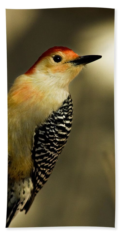 Animal Hand Towel featuring the photograph Perched And Ready by Lana Trussell