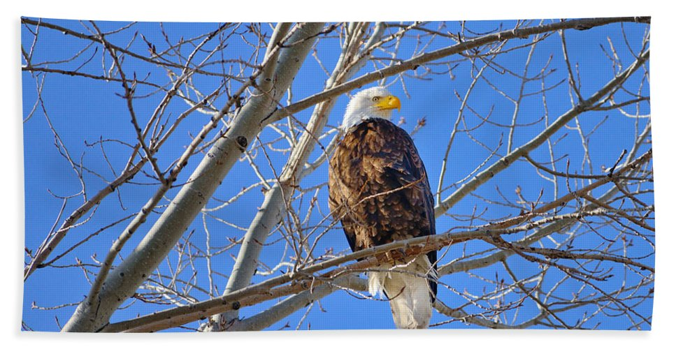 Bald Eagle Hand Towel featuring the photograph Perched Bald Eagle by Greg Norrell