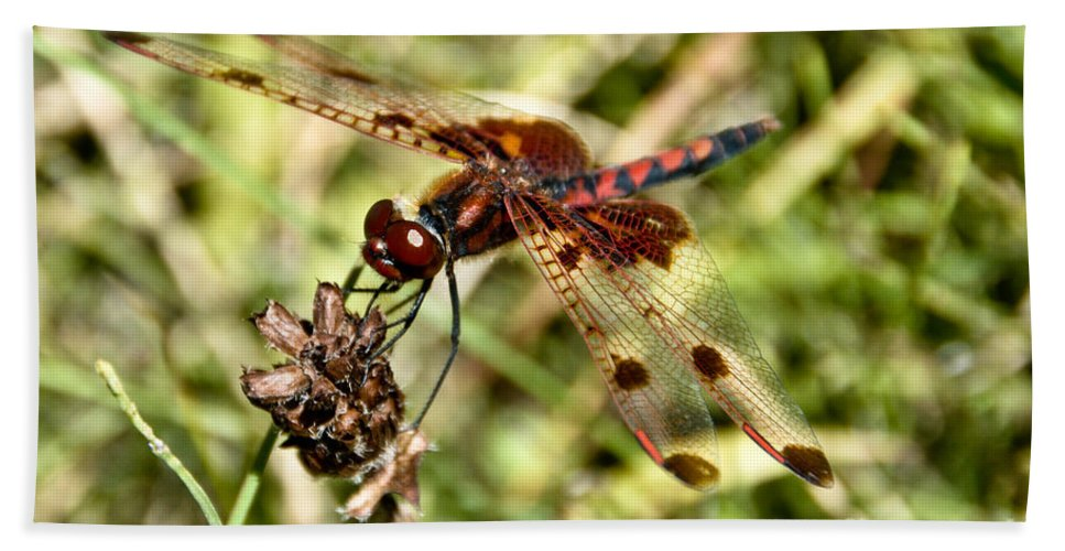 Dragonfly Hand Towel featuring the photograph Perched Dragon by Cheryl Baxter