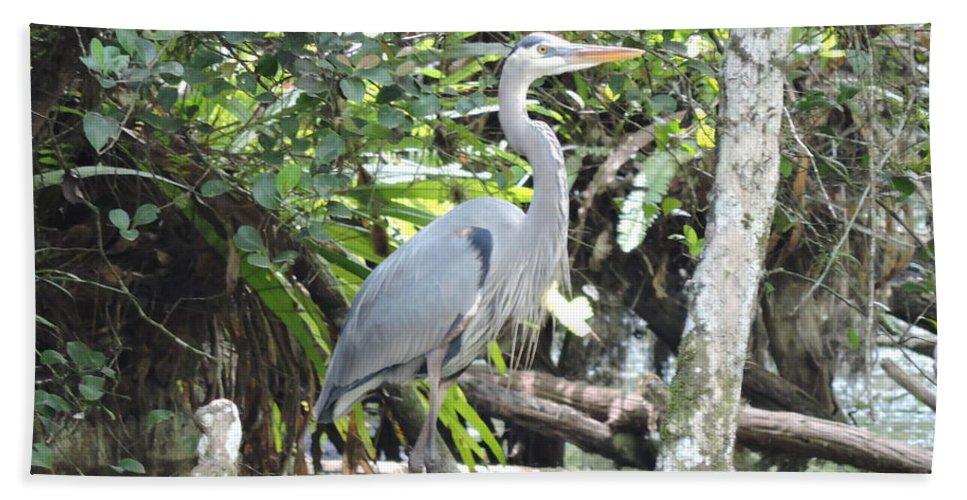 Blue Heron Bath Sheet featuring the photograph Perching Blue Heron by Marilee Noland