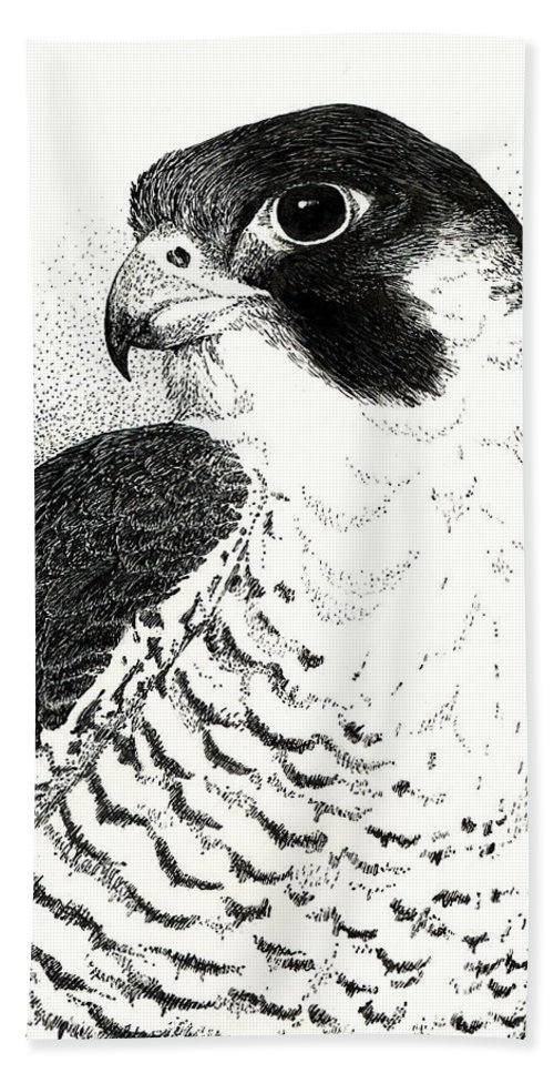 Bird Hand Towel featuring the drawing Peregrine Falcon by Ann Ranlett