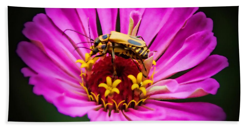 Pink Zinnia Hand Towel featuring the photograph Perfect Happiness by Elizabeth Winter