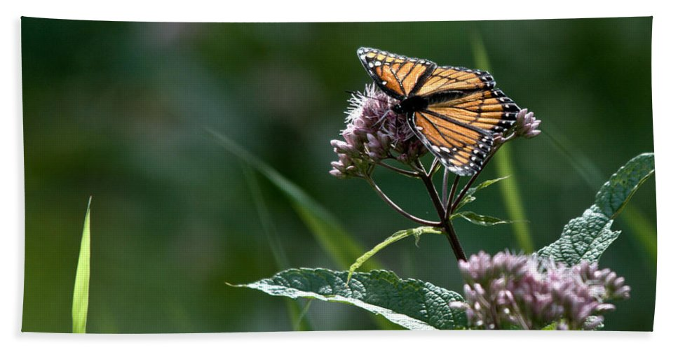 Monarch Hand Towel featuring the photograph Perfect Monarch by Cheryl Baxter