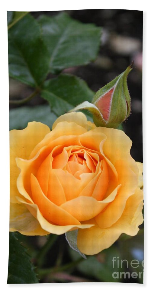 Rose Bath Sheet featuring the photograph Perfect Rose by Christiane Schulze Art And Photography