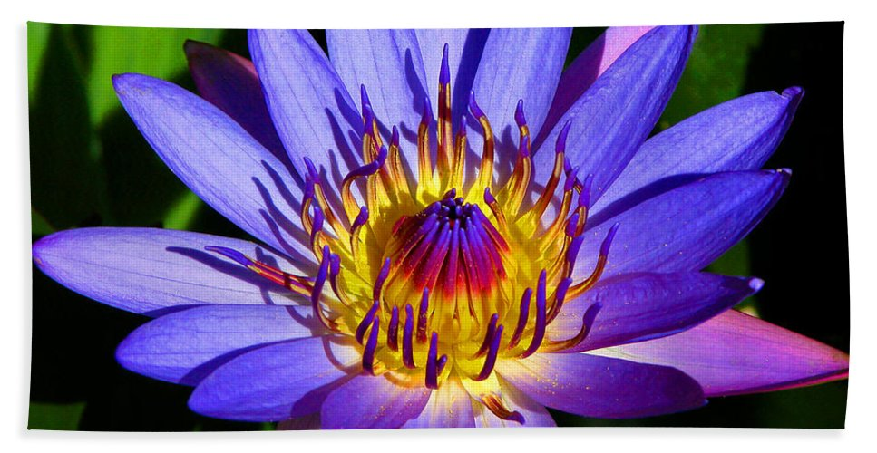 Lilly Bath Towel featuring the photograph Perfect Water Lily by Lynn Bauer