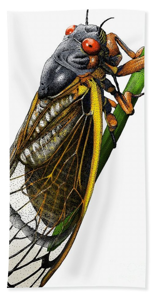 Animal Bath Sheet featuring the photograph Periodical Cicada by Roger Hall