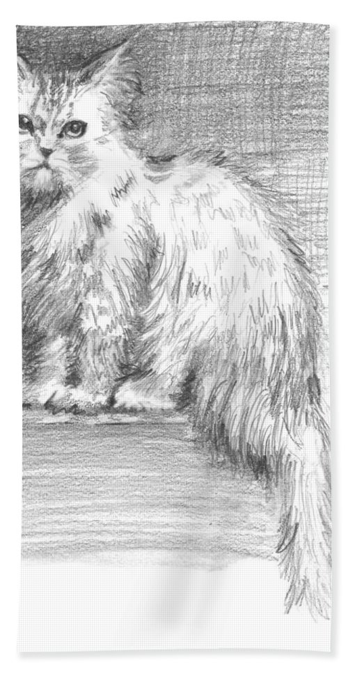 Persian Cat Hand Towel featuring the drawing Persian Cat by Sarah Parks