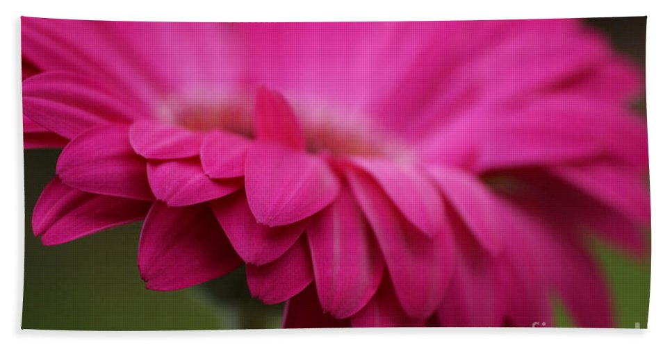 Pink Hand Towel featuring the photograph Petals Pink by Carol Lynch