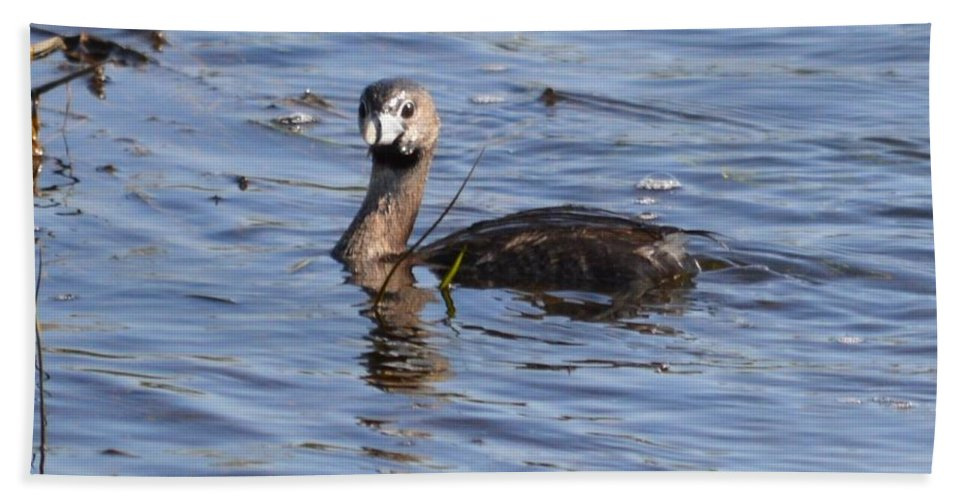 Pied-billed Grebe Bath Sheet featuring the photograph Pied-billed Grebe by Bonfire Photography