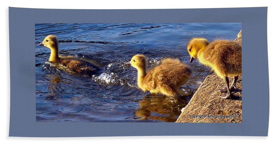 Goslings Bath Sheet featuring the photograph Pied Piper by Tami Quigley