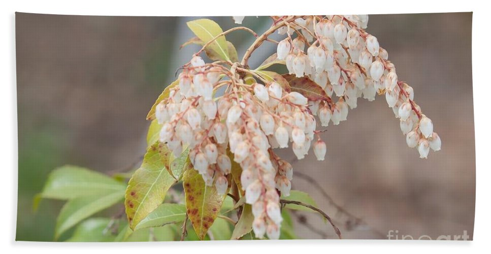 Pieris Japonica 'dorothy Wycoff' Andromeda Hand Towel featuring the photograph Pieris Japonica 'dorothy Wycoff' Andromeda by Liane Wright