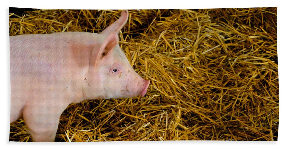Animal Hand Towel featuring the photograph Pig Standing In Hay by Amy Cicconi