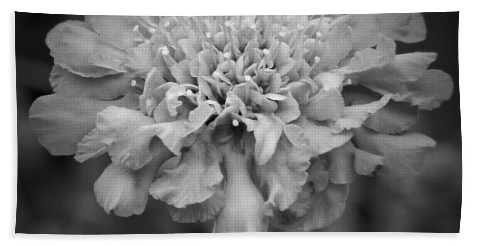 Pincusion Bw Hand Towel featuring the photograph Pincushion Bw by Chalet Roome-Rigdon