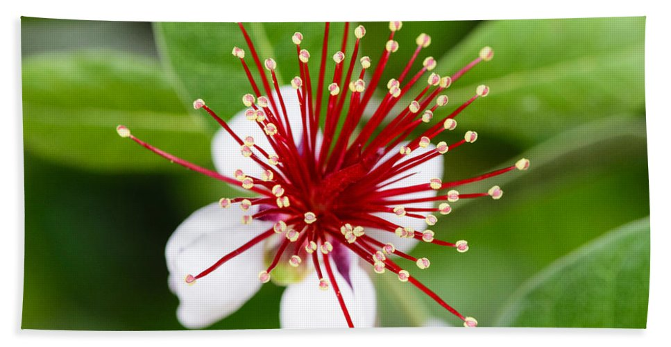 Athens Bath Sheet featuring the photograph Pincushion Flower by Steve Samples
