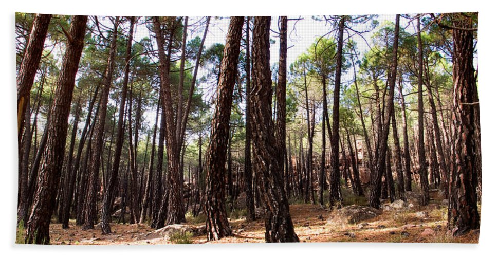 Red Rock Hand Towel featuring the photograph Pine Forest by Weston Westmoreland