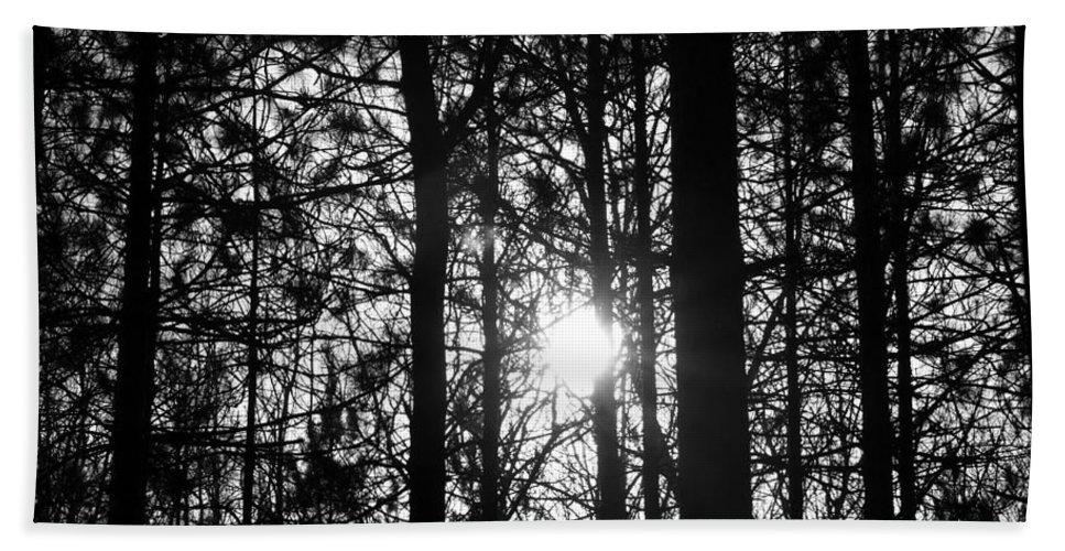 Pine Bath Sheet featuring the photograph Pine Grove I by Joe Faherty