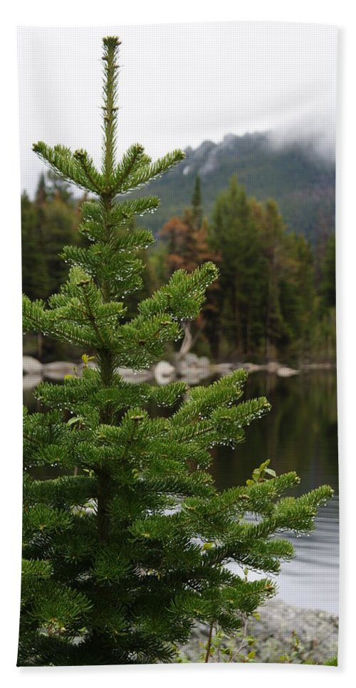 Pine Tree Hand Towel featuring the photograph Pine Tree And Rain Drops by Alan Hutchins