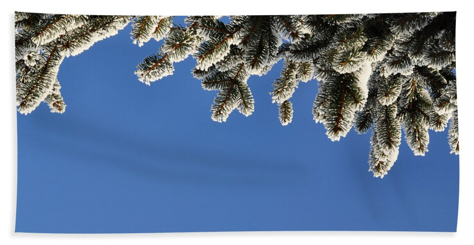 Abstract Hand Towel featuring the photograph Pine Tree by TouTouke A Y