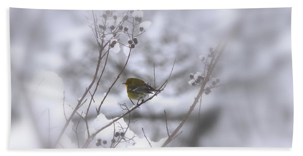 Pine Warbler Bath Sheet featuring the photograph Pine Warbler In The Snow - Better Than Red by Travis Truelove