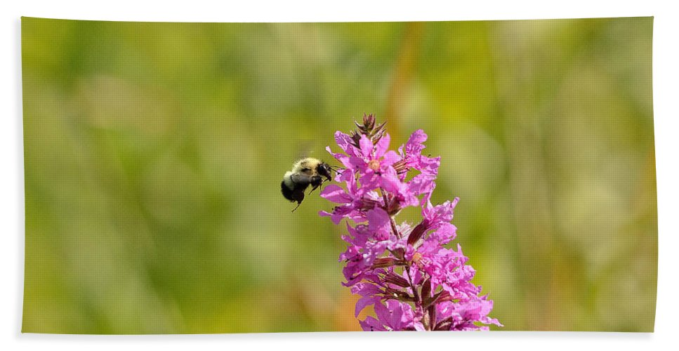 Bee Bath Towel featuring the photograph Pink And Gold by David Porteus