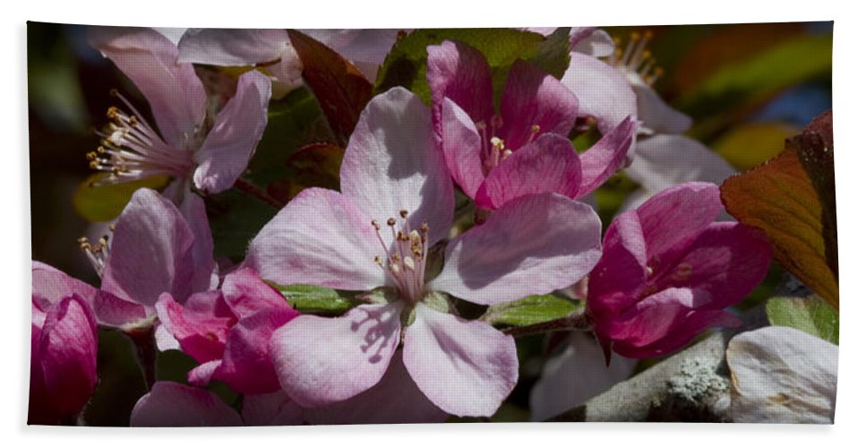 Malus Bath Sheet featuring the photograph Pink And Pretty by Kathy Clark
