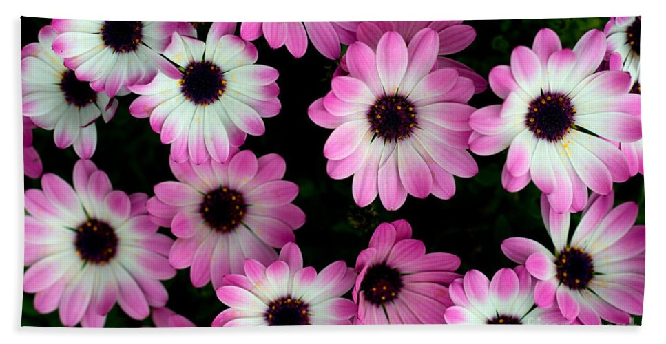 Flower Hand Towel featuring the photograph Pink And White Daisies by Jaroslaw Blaminsky