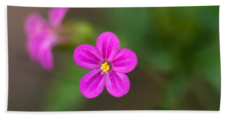 Flower Hand Towel featuring the photograph Pink And Yellow Flowers With Green Blurry Background by Jaroslaw Blaminsky