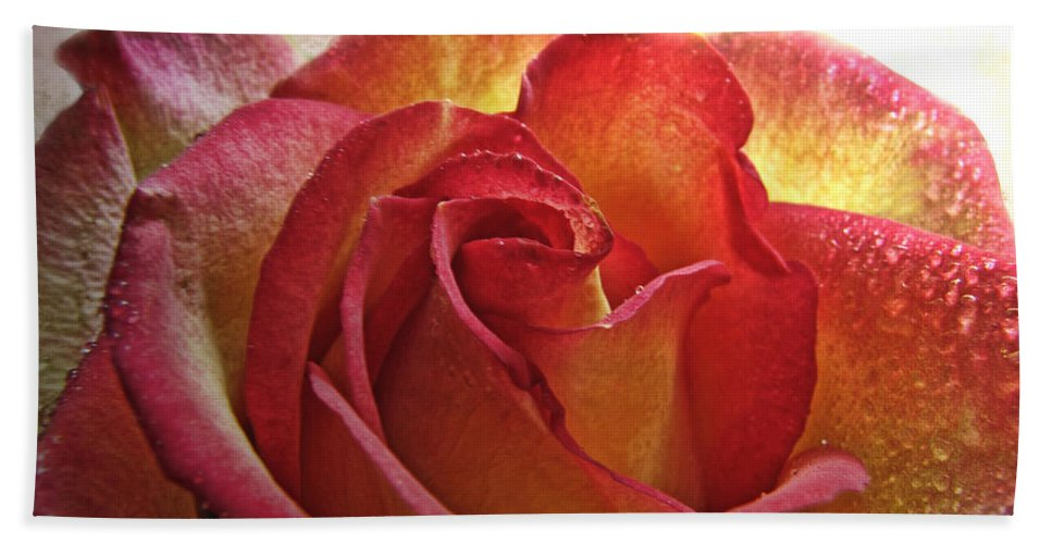 Dew Hand Towel featuring the photograph Pink And Yellow Rose With Water Drops by Debbie Portwood