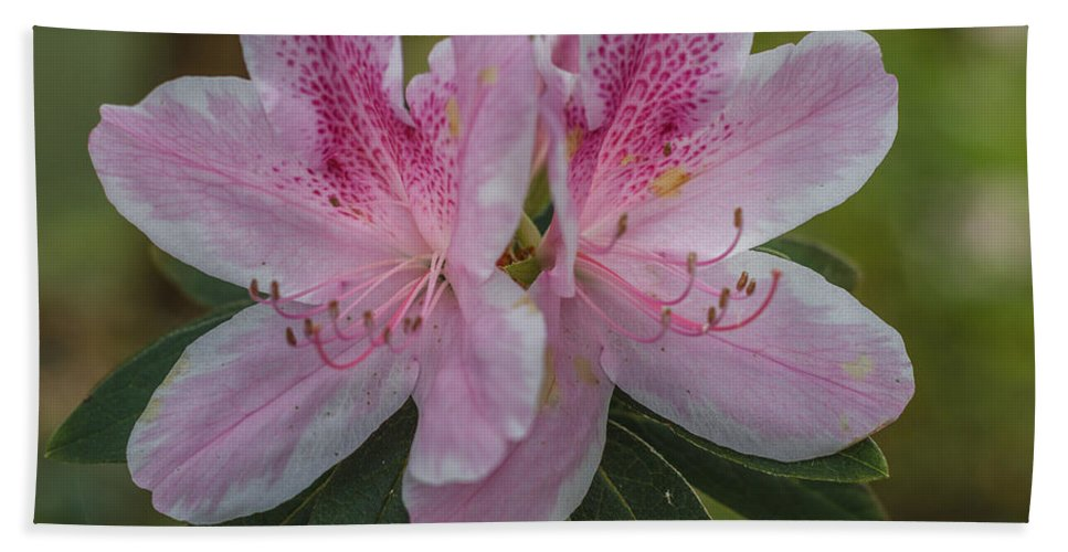 Florida Hand Towel featuring the photograph Pink Azalea by Jane Luxton