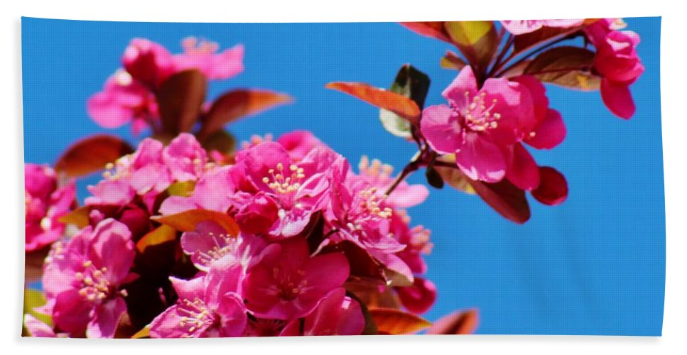 Flowers Hand Towel featuring the photograph Pink Blossoms Blue Sky 031015a by Edward Dobosh