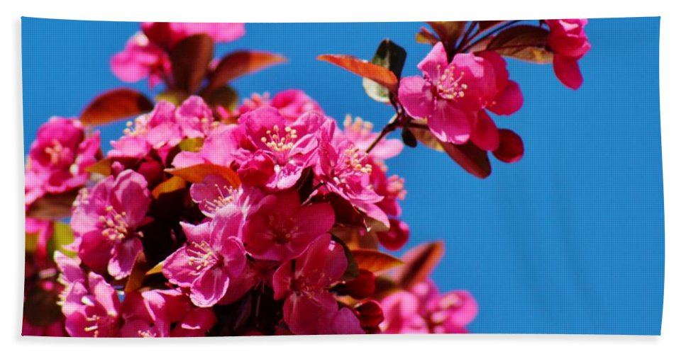 Wildlife Bath Sheet featuring the photograph Pink Blossoms Blue Sky 031015aa by Edward Dobosh